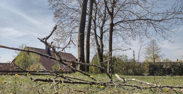 Grossansicht in neuem Fenster: Friedhofsbäume_teaser_613x314